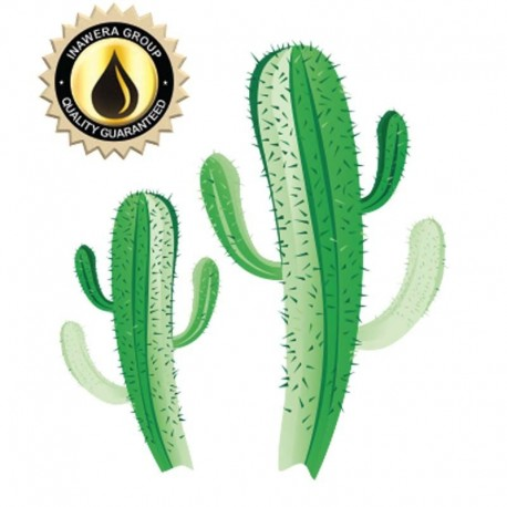Inawera Concentrates Cactus Aroma - Inawera eclshop.dk